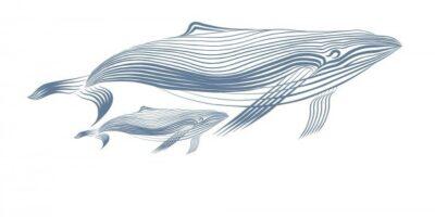 Марис киты декор м2
